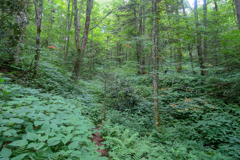 Haywood Gap Trail -- 5,140'