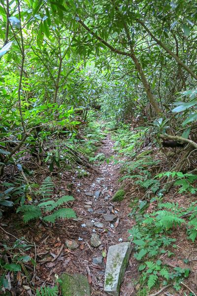 Haywood Gap Trail -- 5,030'
