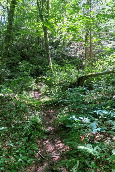 Haywood Gap Trail -- 4,650'
