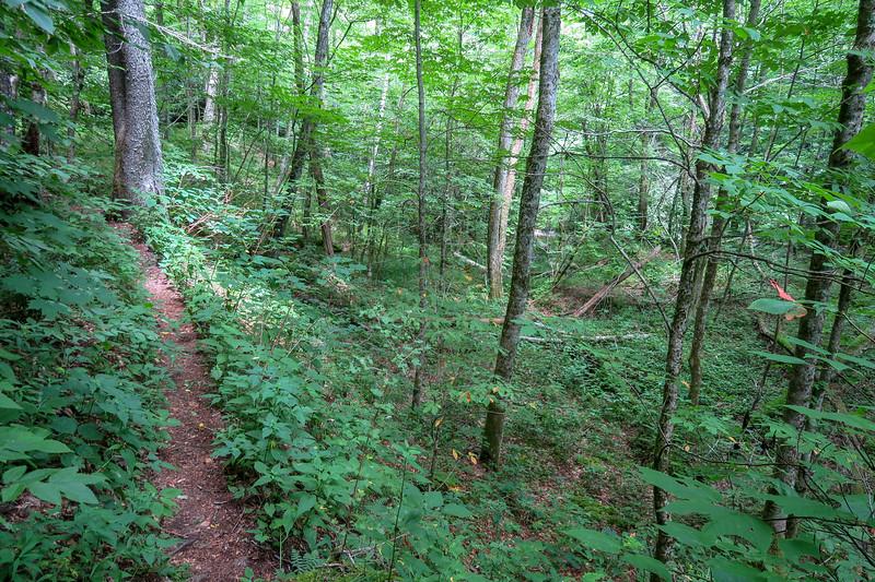 Haywood Gap Trail -- 4,440'