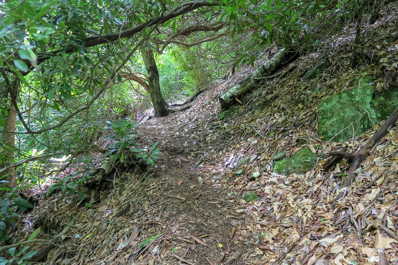 Haywood Gap Trail -- 4,460'