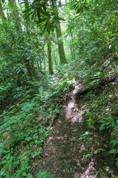 Haywood Gap Trail -- 4,580'