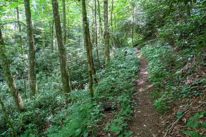 Haywood Gap Trail -- 4,900'