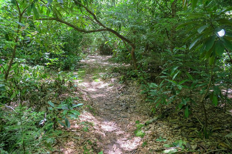 Haywood Gap Trail -- 4,310'