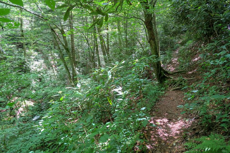 Haywood Gap Trail -- 4,820'