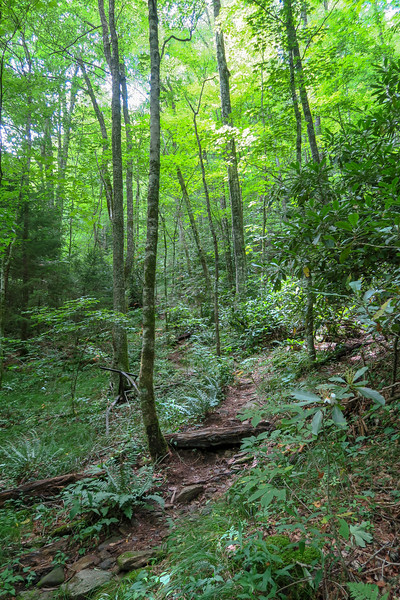 Haywood Gap Trail -- 4,360'