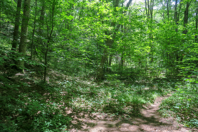 Haywood Gap/Buckeye Gap Trail Junction -- 4,020'