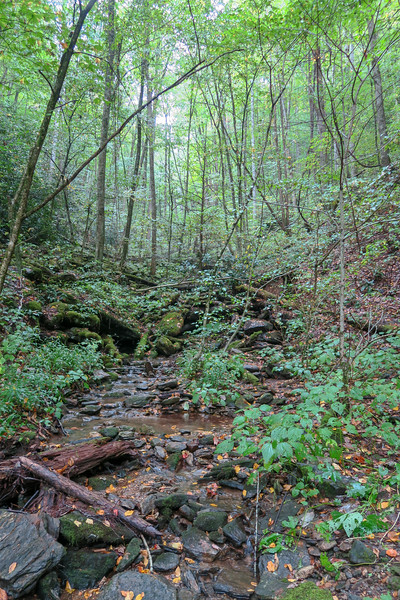 Haywood Gap Trail -- 3,640'