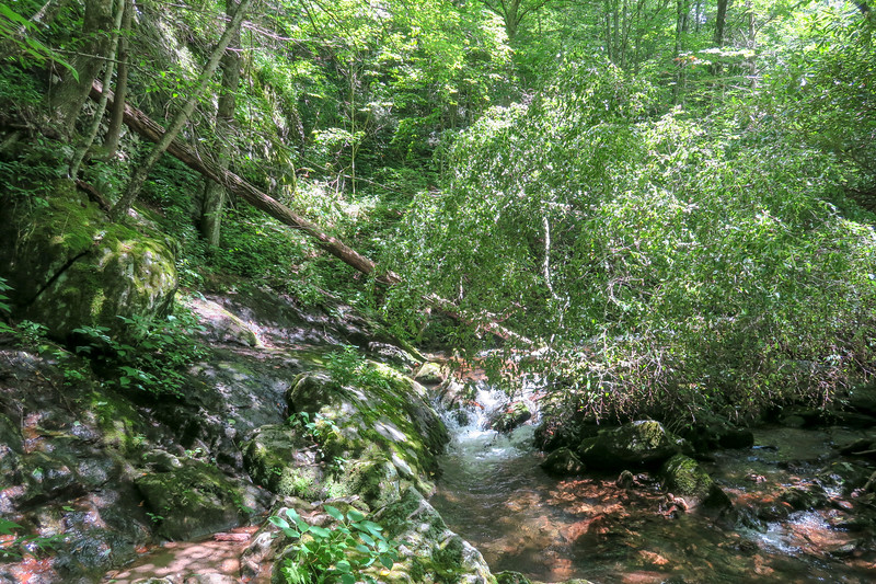 Haywood Gap Trail -- 4,260'
