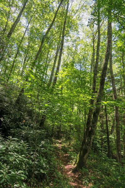 Haywood Gap Trail -- 4,200'