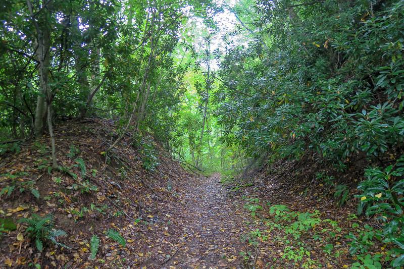 Haywood Gap Trail -- 3,650'