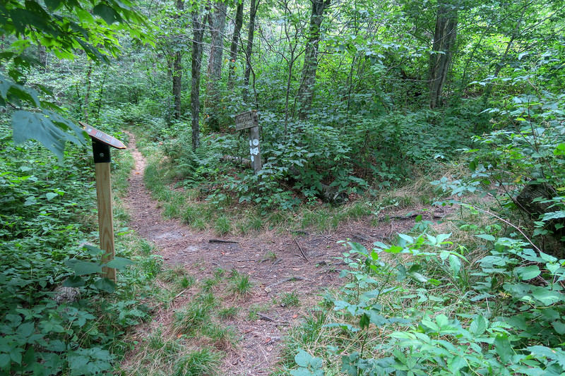 Haywood Gap/Mountains-to-Sea Trail Junction -- 5,220'