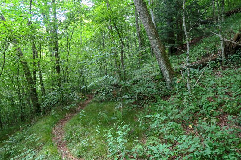 Haywood Gap Trail -- 4,400'