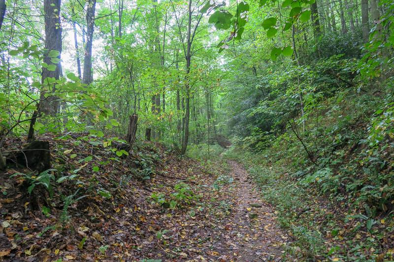 Haywood Gap Trail -- 3,720'
