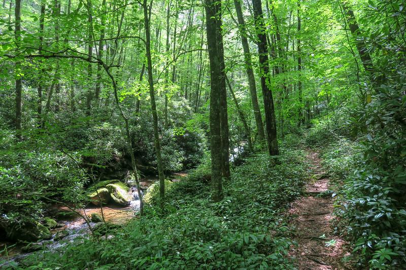 Haywood Gap Trail -- 4,340'