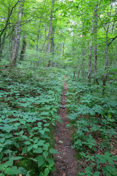 Haywood Gap Trail -- 5,090'