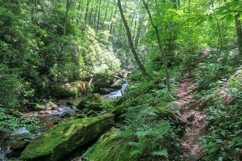 Haywood Gap Trail -- 4,600'