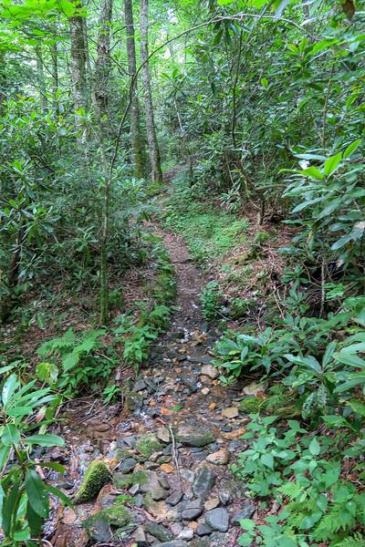 Haywood Gap Trail -- 4,860'