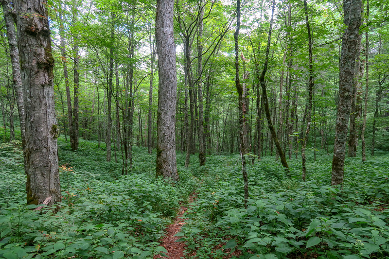 Haywood Gap Trail -- 5,180'