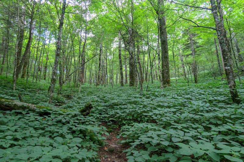 Haywood Gap Trail -- 5,160'