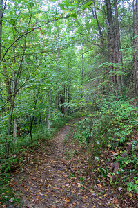 Haywood Gap Trail -- 3,620'