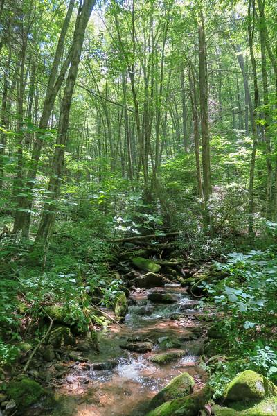 Grassy Ridge Branch -- 4,050'