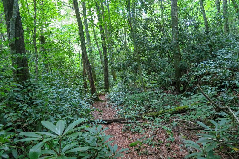 Haywood Gap Trail -- 4,330'