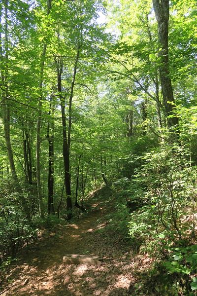 Horse Cove Gap Trail -- 3,650'