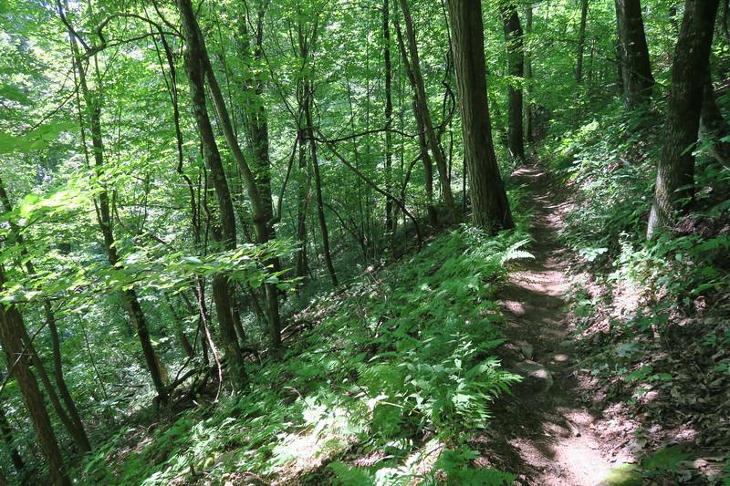Horse Cove Gap Trail -- 3,450'