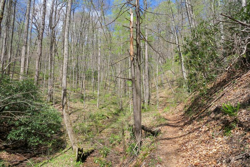 Horse Cove Gap Trail -- 2,950'