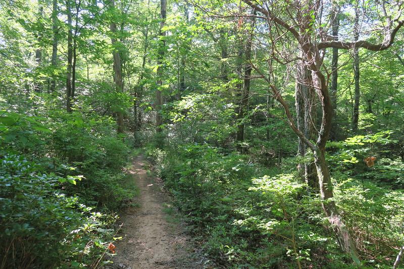 Horse Cove Gap Trail -- 3,760'