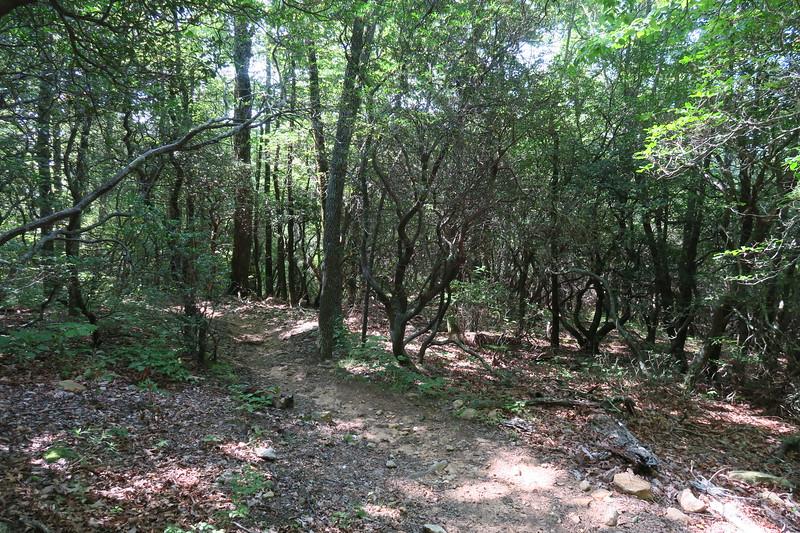 Horse Cove Gap Trail -- 3,600'