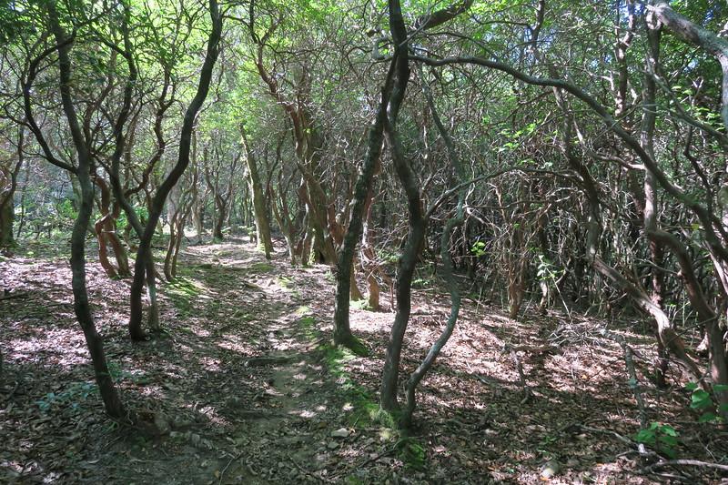 Horse Cove Gap Trail -- 3,720'