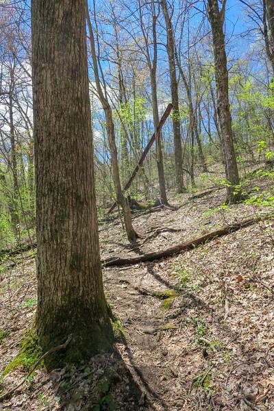 Horse Cove Gap Trail -- 3,250'