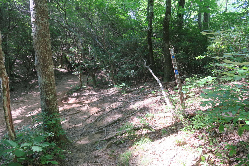 Horse Cove Gap/Squirrel Gap Trail Junction (Horse Cove Gap) -- 3,420'