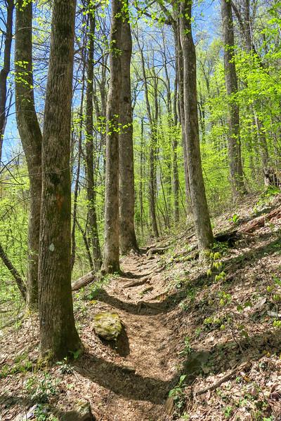 Horse Cove Gap Trail -- 3,350'