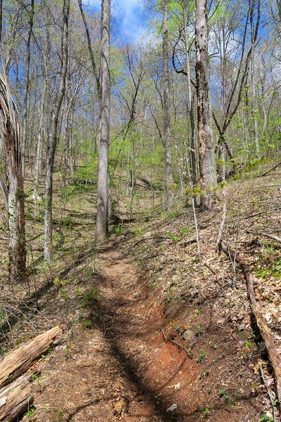Horse Cove Gap Trail -- 3,100'