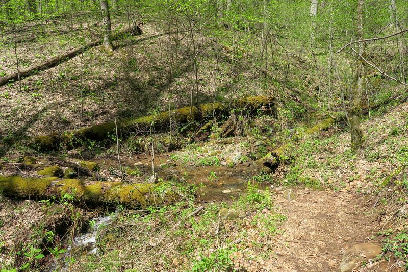 Horse Cove Gap Trail -- 3,150'