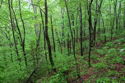 Ingles Field Gap Trail -- 2,840'