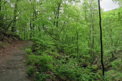 Ingles Field Gap Trail -- 2,620'