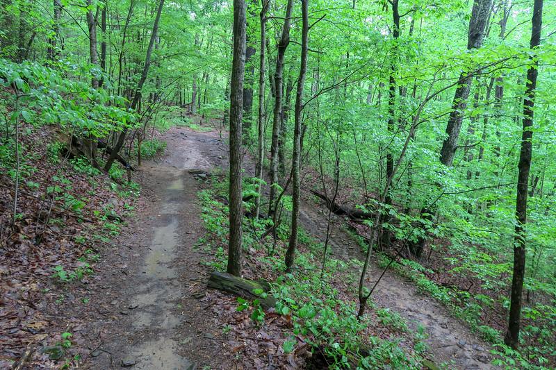 Ingles Field Gap/Ingles Field Gap Connector Trail Junction -- 2,750'
