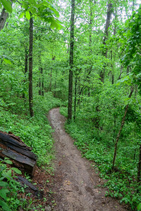 Ingles Field Gap Trail -- 2,900'