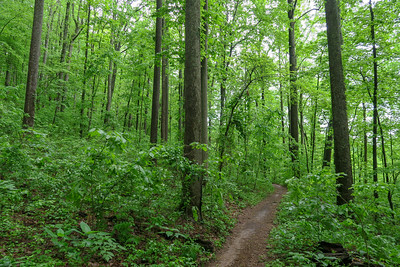 Ingles Field Gap Trail -- 2,520'