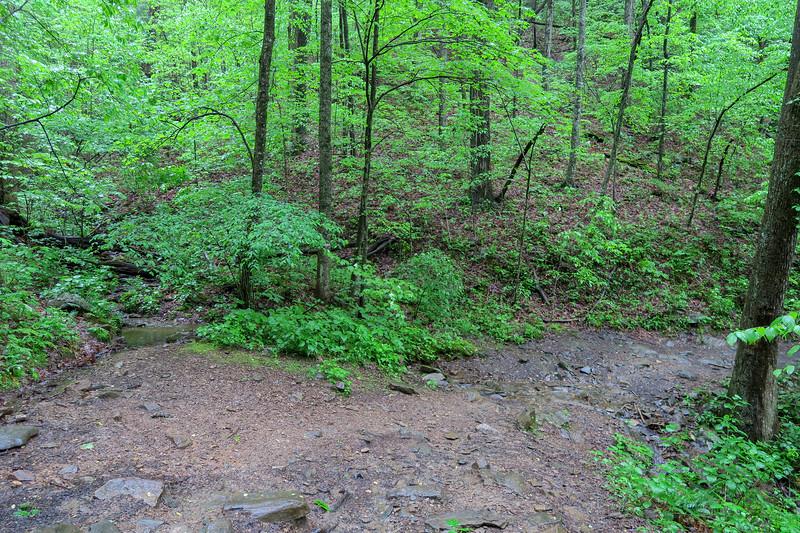 Ingles Field Gap Trail -- 2,700'