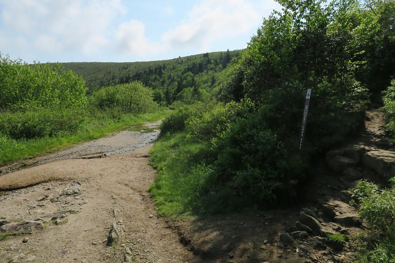Ivestor Gap/Art Loeb Spur Trail Junction -- 5,800'