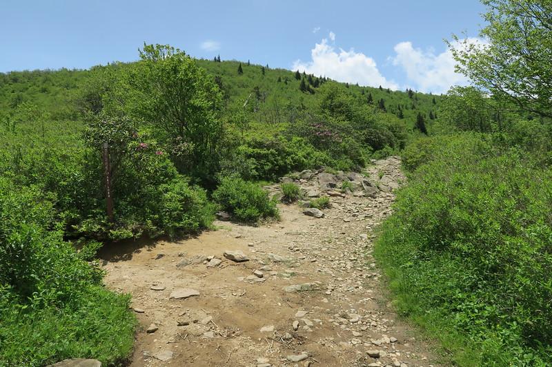 Ivestor Gap/Art Loeb Trail South Junction -- 5,720'
