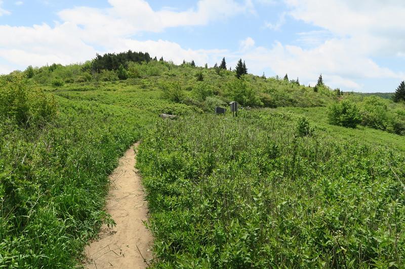 Ivestor Gap Trail @ Ivestor Gap -- 5,700'