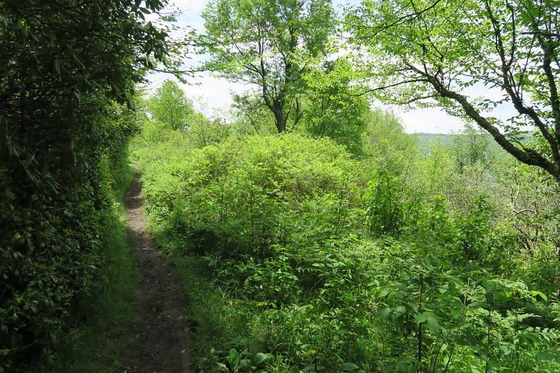 Ivestor Gap Trail -- 5,650'