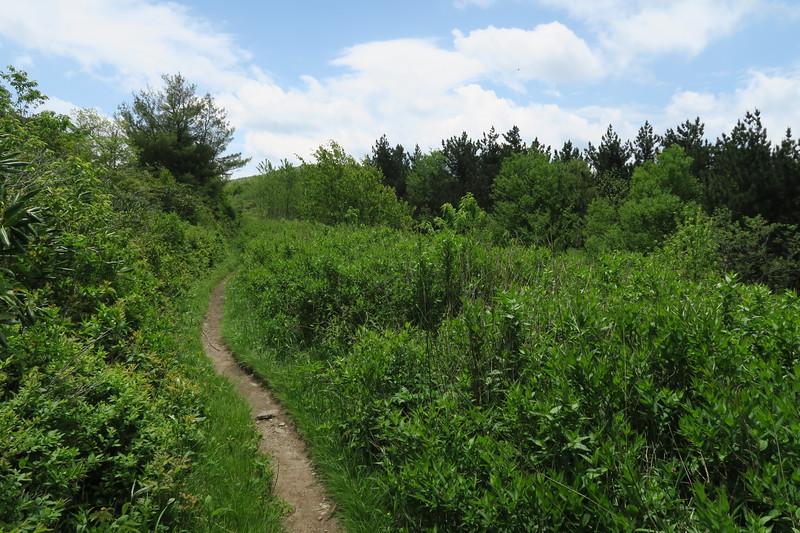 Ivestor Gap Trail -- 5,680'