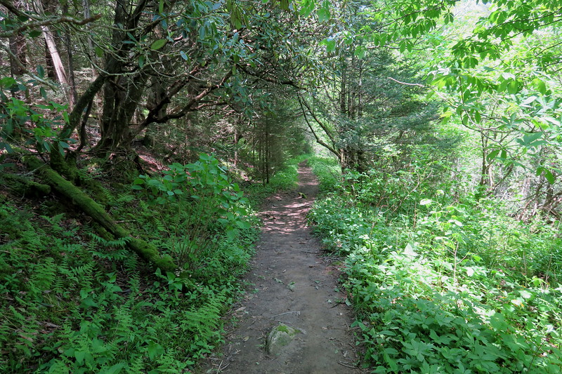 Ivestor Gap Trail -- 5,740'